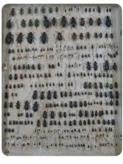 نمونهای از جمعآوریهای داروین هنگام گردش
