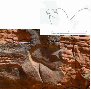 باستانشناسان در بیابانهای مرکزی عربستان سعودی حکاکیهایی با نقش شتر در اندازه واقعی کشف کردند.
