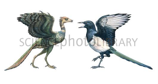 مقایسه ظاهر آرکیوپتریکس و یک مگ پای