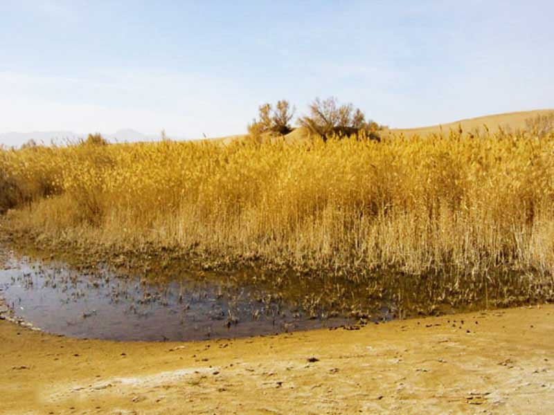 نیزار کویر مصر