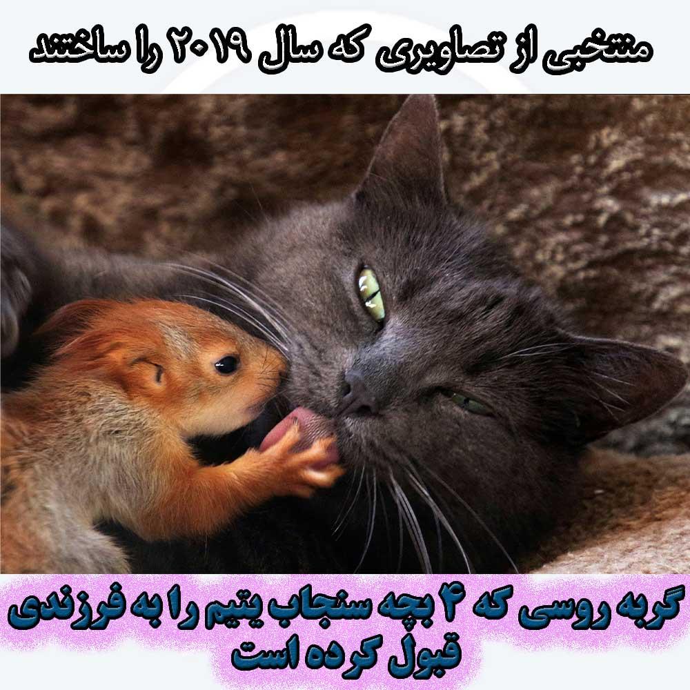 گربه روسی 4 سنجاب یتیم را به فرزندی قبول می کند.