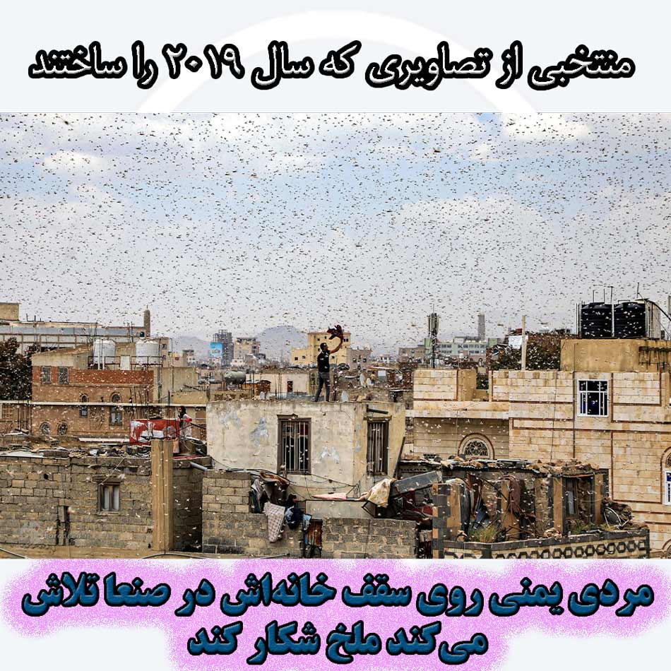 ردی یمنی روی سقف خانهاش در صنعا تلاش میکند ملخ شکار کند.