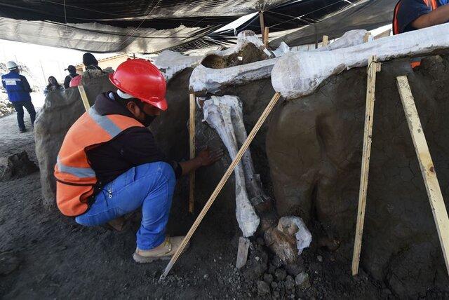 اسکلت ماموتهای کشفشده در مکزیک
